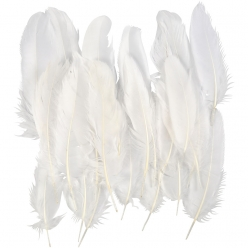 plumes blanches 15 cm 350 pieces