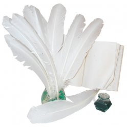 plumes indiennes blanches 10 plumes