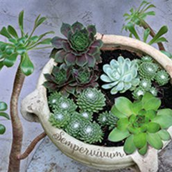 serviette succulents 20 pieces