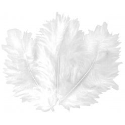 plumes blanches 10 cm 50 pieces