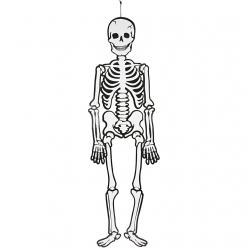 squelettefluo120cm