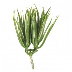 herbesvanillapiquer7cm