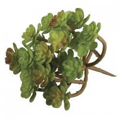 plante grasse succulent sedum95x8 cm