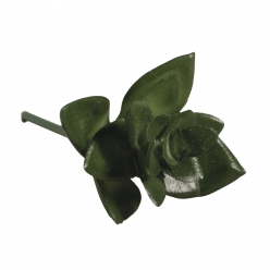 plante grasse mini succulent haworthia5x35 cm