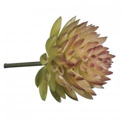 plantegrassemini succulentecheveria